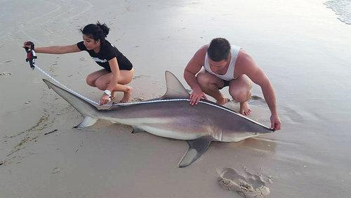 ワイルドすぎる…素手でサメを捕まえる男05