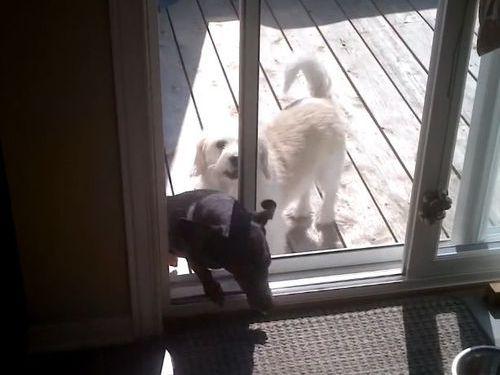 犬の自動ドアをDIY05