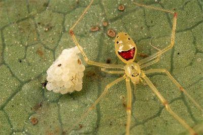 漫画みたいな笑顔をした蜘蛛
