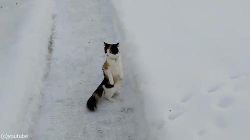 雪景色を見たうちの猫は02