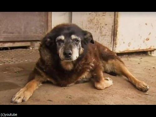 最高齢の犬マギーが亡くなる00