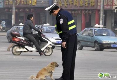 犬と警官01