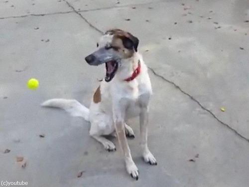「うちの犬とボール」05