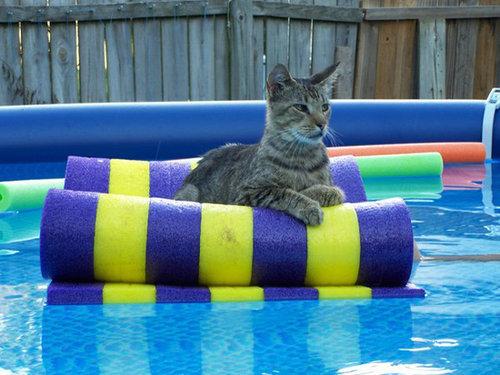 夏を満喫する猫02