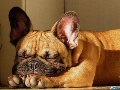 寝てる犬11