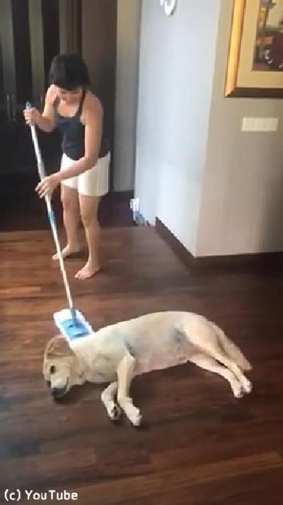 「暑くて動けません…」お掃除を邪魔するワンちゃん05