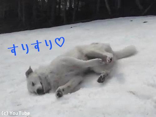 雪に大喜びの犬00