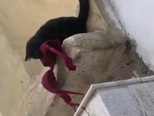 うちの猫が下着泥棒だと知ってしまったとき00