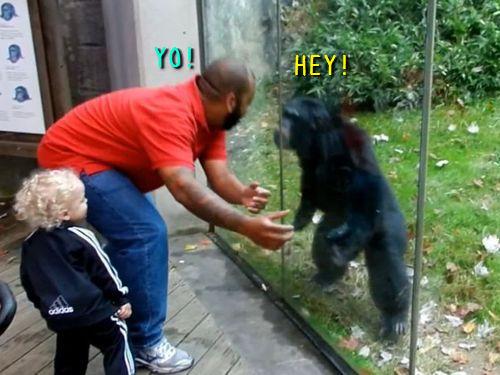一緒に踊るチンパンジー00