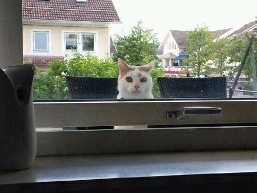 近所の猫の不満02