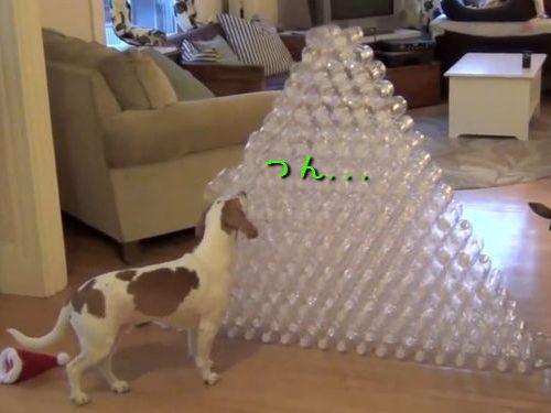 ペットボトルと犬00