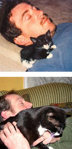 成長した猫06