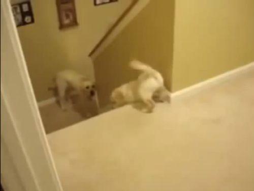 犬と猫の違い、階段の場合01