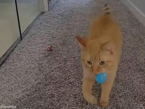 猫「早くこのボールを投げるのニャ!」