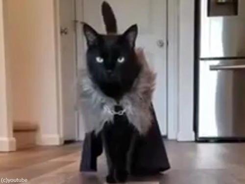 猫のファッションショー02