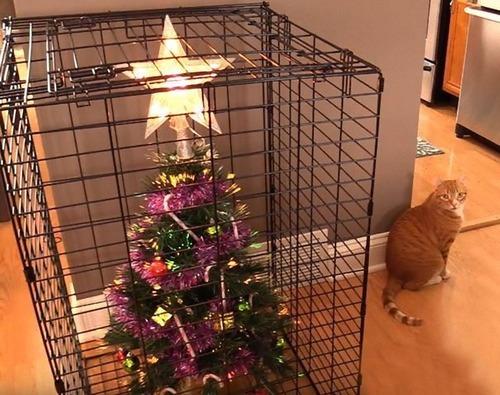 猫のいる家でクリスマスツリー01