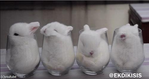 ガラスのコップとウサギ4匹02