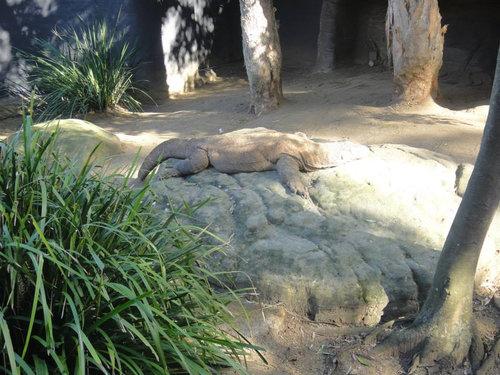 動物園に行ったらみんな寝ていた02