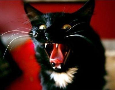 猫アタック01