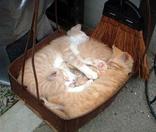 疲れ果てた犬と猫09