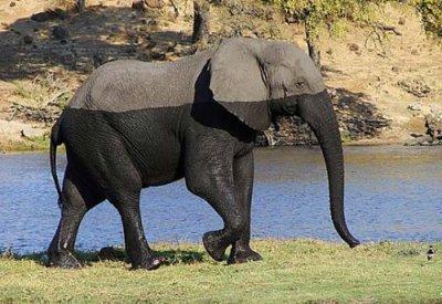 半分だけ濡れているのがひと目でわかる象