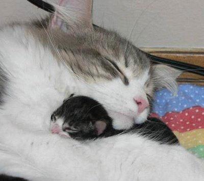 愛し合い猫07