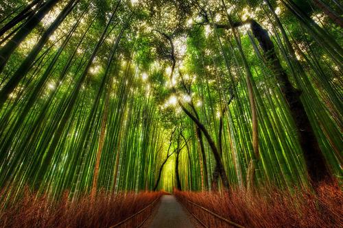 京都の竹林01