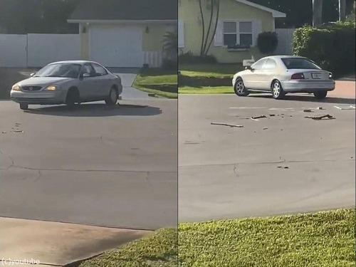 犬が車で暴走00