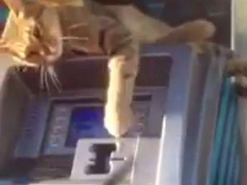 ATMの番猫04