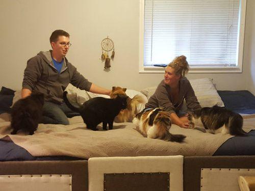 5匹の猫と2匹の犬03