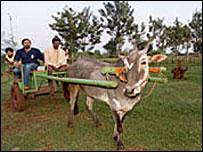 富裕層のインド人向けに農家の体験1泊で1万6千円 -02