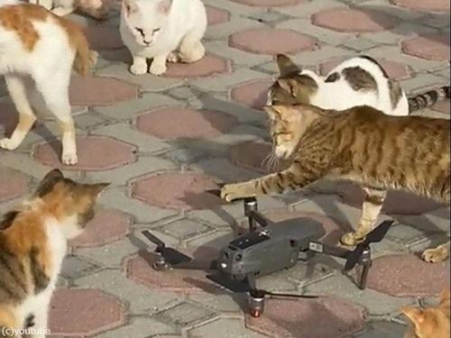 ドローンのプロペラと猫03