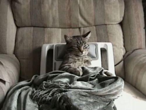 猫とマッサージ機01