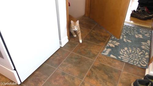 ホイップクリームを愛する猫02