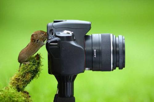 カメラマンな動物13