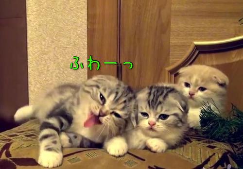 子猫3匹のあくび00