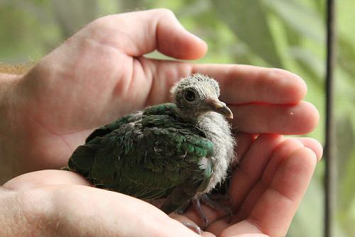 ひな鳥02