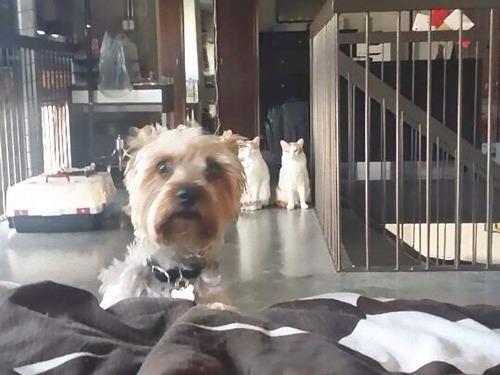 犬と猫の仲がよろしくないとき05