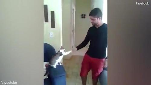 ハイタッチ猫04