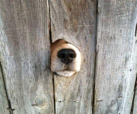 壁越しに会いたがる犬たち16