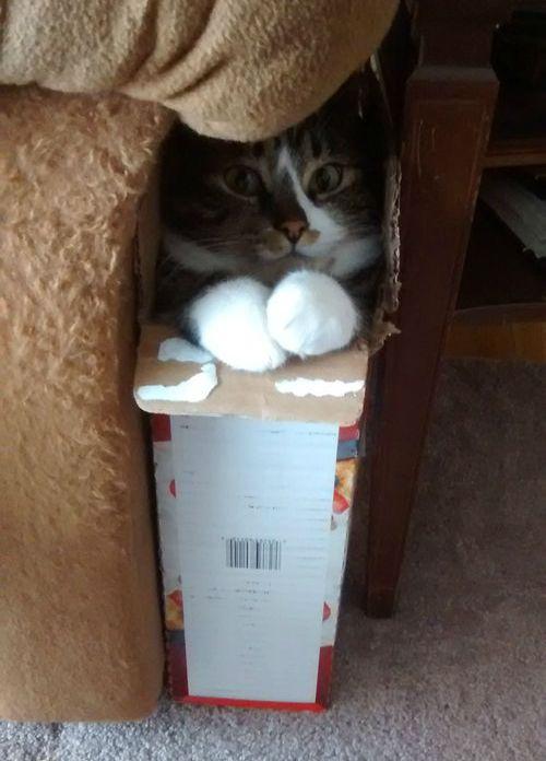01Box・箱や入れ物に収まる動物たち