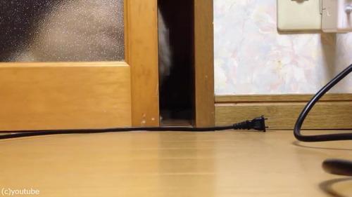 ドアを開けて欲しい猫03