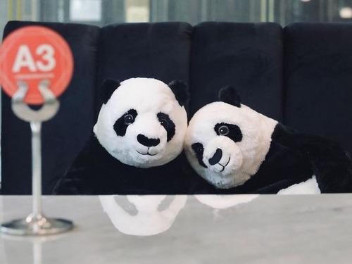 ベトナムのレストランがパンダのぬいぐるみ04