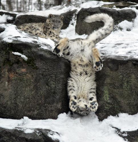 雪を喜ぶ動物05