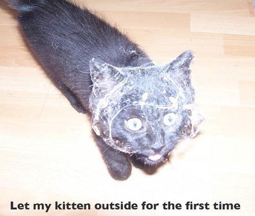 猫の初めての外出12