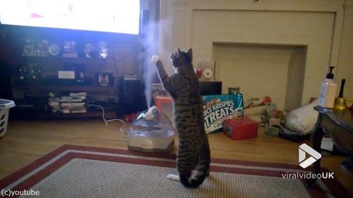 加湿器VS猫01