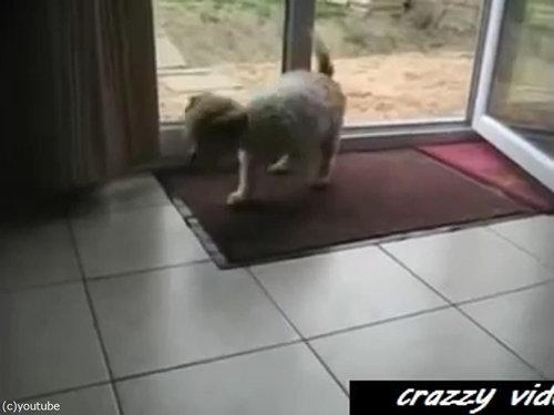 肉球をキレイキレイする犬03
