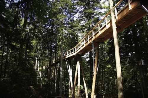 「Tree Top Walk」10