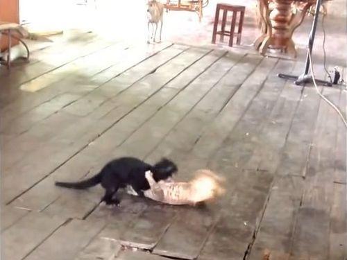 ケンカする猫2匹と止める犬2匹01