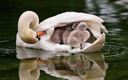 動物の親子画像を貼って自分が癒されるだけのトーク-i-3-0